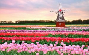 1-Keukenhof-Gardens-Amsterdam